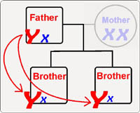 Y chromosome DNA testing - Brothers testing for the same father